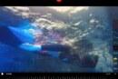 Trening na weekend, Iron Man, open water